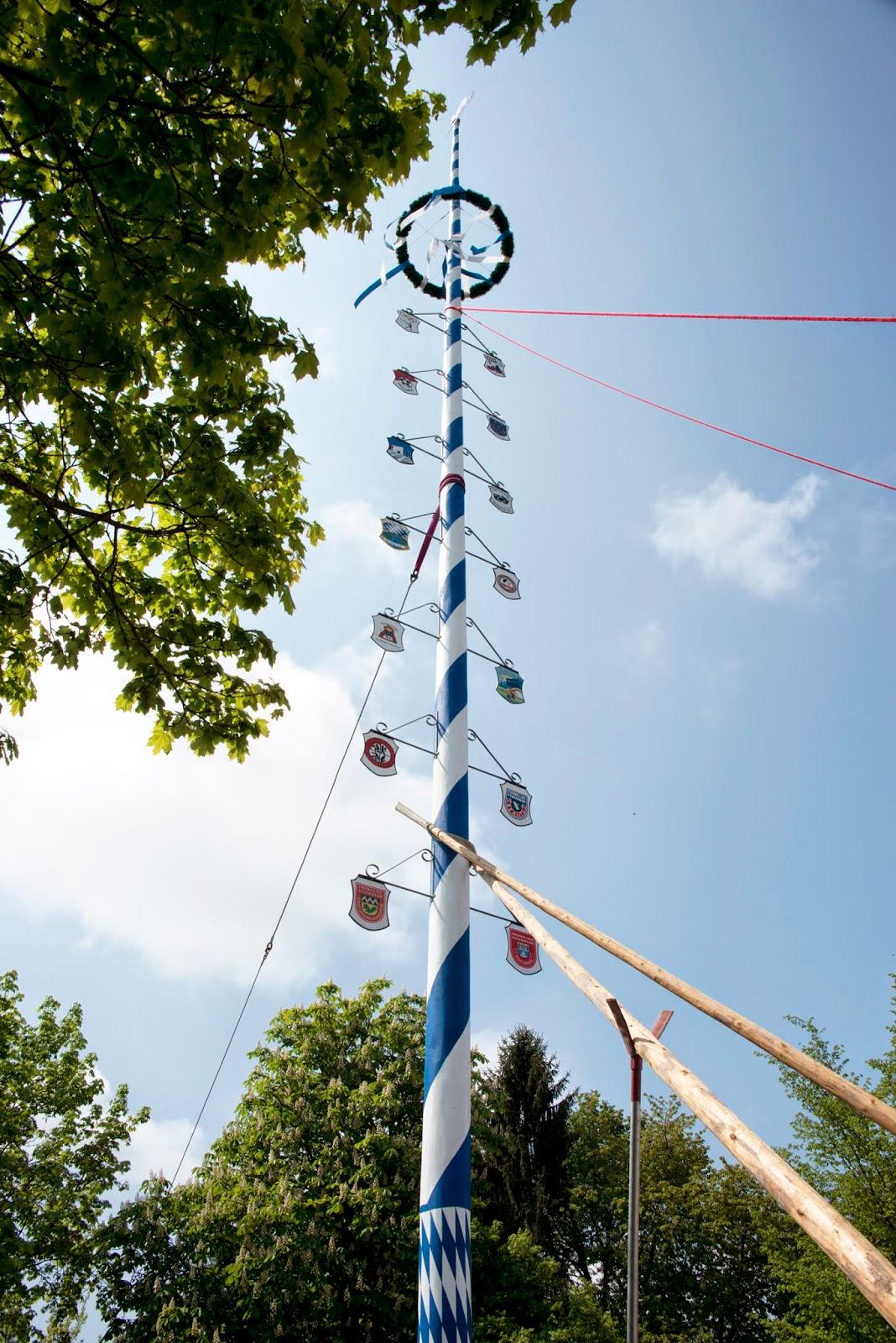 Raising the Maypole (Maibaum) in Bavaria near Munich