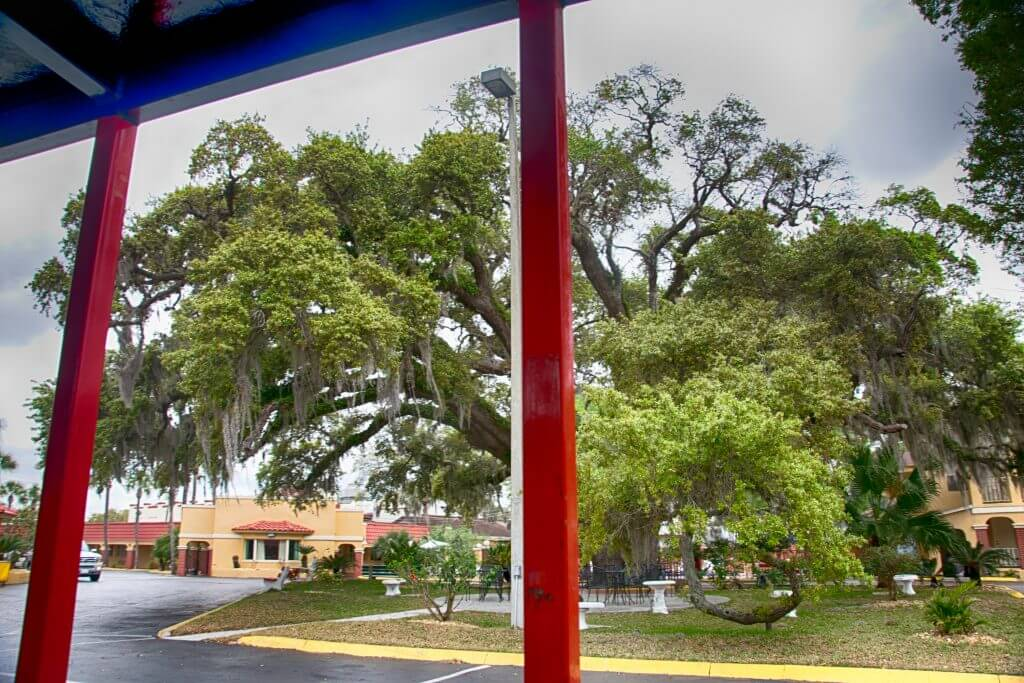 Senator Tree Augustine