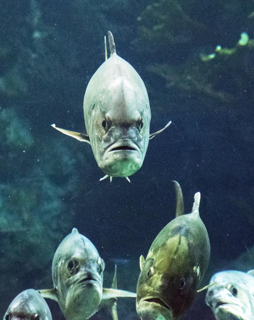 mad-fish