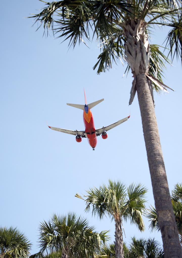 southwest-jet-palm