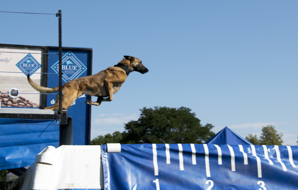 Rocky Mountain Dockdogs Competition at Broomfield Days, CO