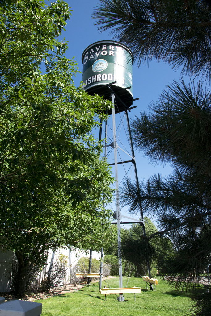 Savery Savory Mushroom Can Water Tower A Travel For Taste